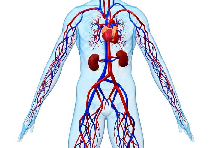 Лечение сложных заболеваний кровеносной системы относится к дорогостоящему лечению