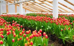 как выращивать цветы в теплице, стартовый капитал