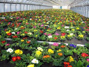 бизнес идея- выращивание цветов в теплице