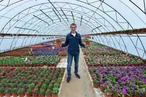 как вырастить цветы на продажу