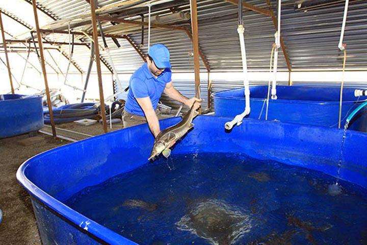 Изображение - Как открыть рыбную ферму и что нужно для этого бизнеса bassejn