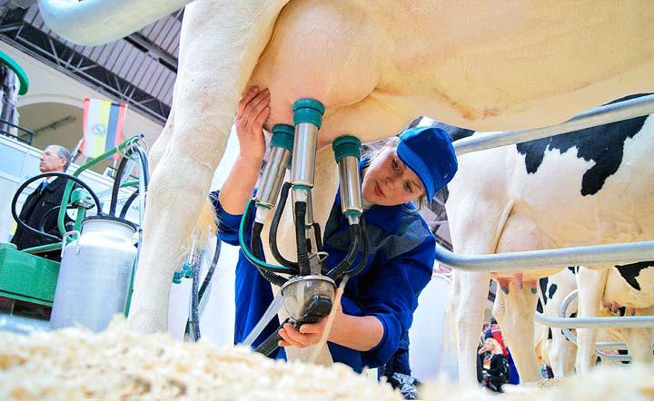 Механизированное оборудование для надоя молока на ферме