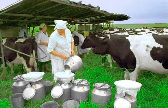 Молочная ферма