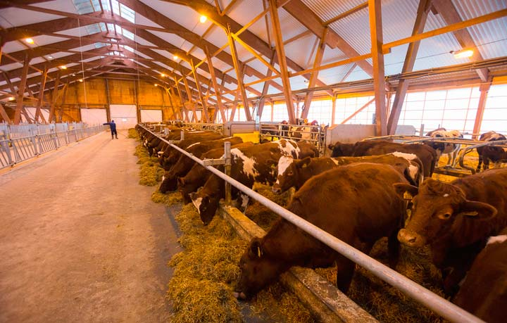 Размер молочной фермы