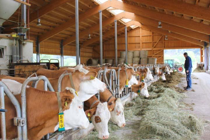 Небольшая молочная ферма на 20 голов скота