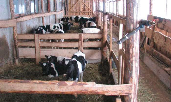 Помещение для телят на ферме