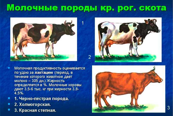 Породы молочных коров