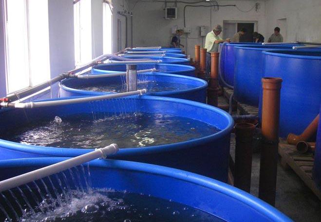 Разведение рыб как бизнес