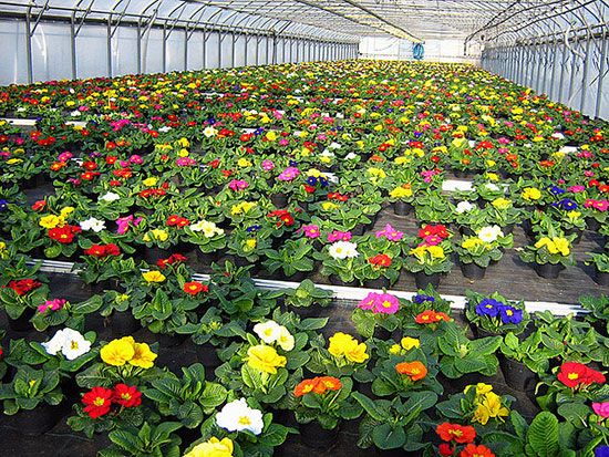 Выращивание цветов в теплице как бизнес 2020