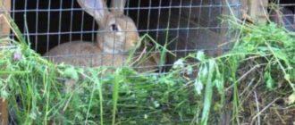 кролик разрешен во всех религиях