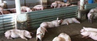 Рассчитать расходы на открытие бизнеса и дальнейшее содержание свинофермы.
